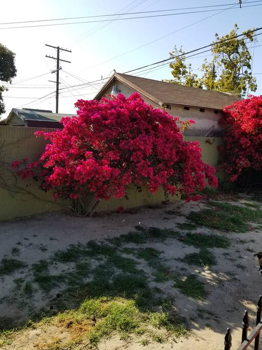 Picture 21 of 2 bedroom Guest house in Los Angeles
